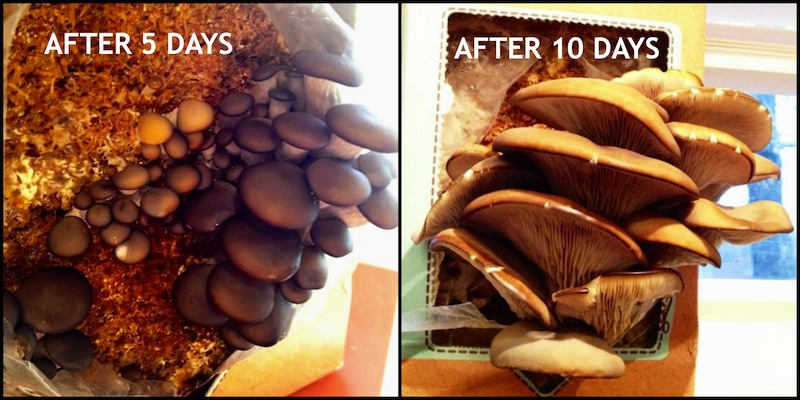 Grow-Your-Own-Mushroom-Kit / Fearless Homemaker
