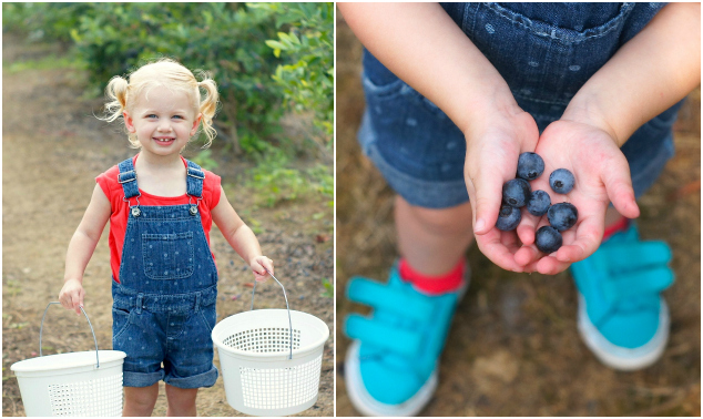 Fearless Baby blueberry picking